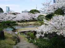 Kyû-shiba-rikyû